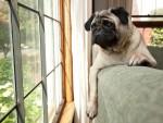 Los 7 accidentes más comunes y peligrosos de los perros en el hogar