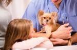Tres alimentos para cuidar la salud bucal de tu perro
