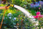 ¿Cómo ahorrar agua sin descuidar el jardín?