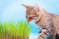 Premios saludables para mascotas