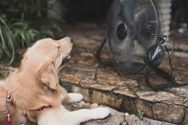 ¿Cómo evitar los golpes de calor de las mascotas en verano?