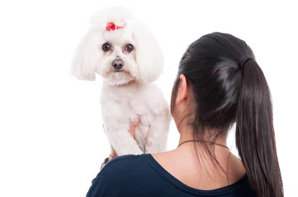 Empresas pet friendly: Las ventajas de llevar tu mascota al trabajo