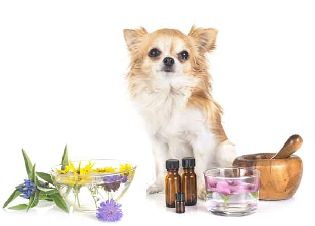 Remedios caseros eficaces para tratar los problemas de salud de tu mascota