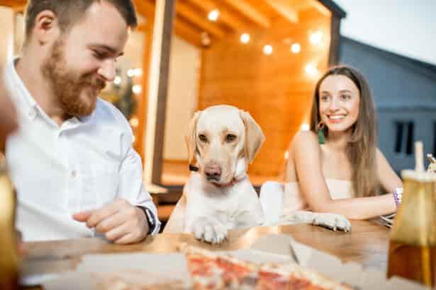 ¿Cómo lograr que tu perro no te pida comida en la mesa?
