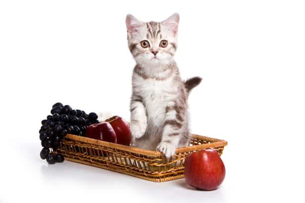 Cinco frutas toxicas para los gatos
