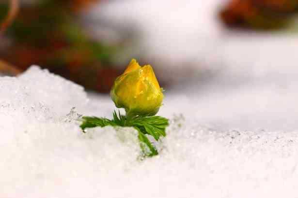 ¿Cómo proteger tus plantas en invierno?