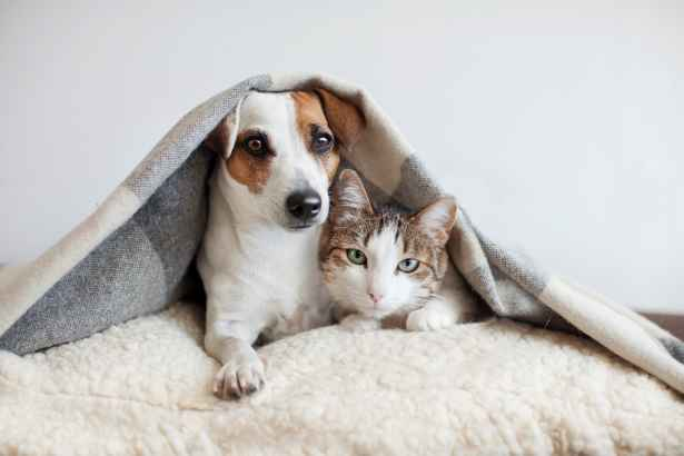¿Cómo afecta el frío a tu mascota? Todo lo que necesitas saber