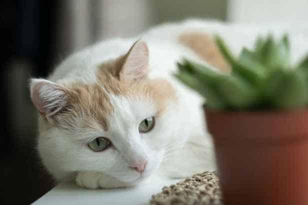 ¿Sabías que el ronroneo de tu gato te beneficia?