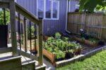 Un invernadero inteligente para cultivar comida en casa